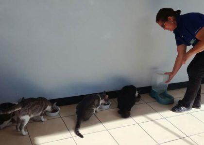 dona-ligia-gatitos