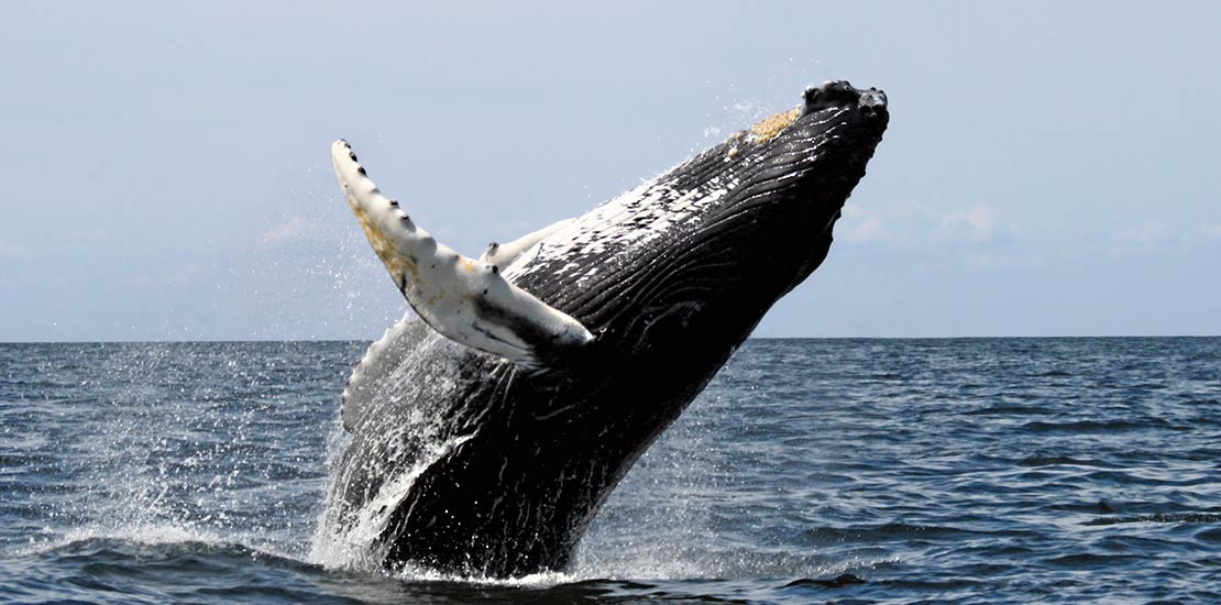parque-marino-ballena
