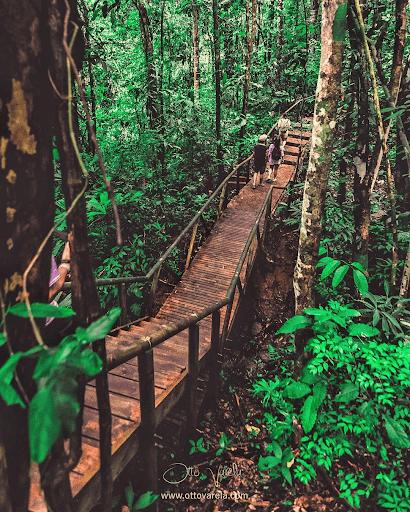 Senderos del Parque Manuel Antonio