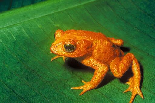 Biodiversidad en Monteverde