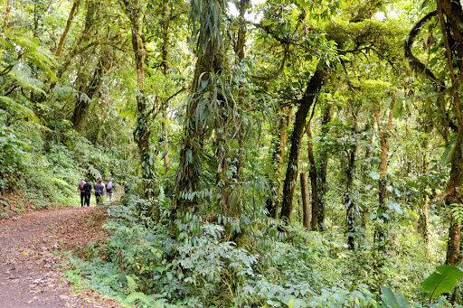 Paseos guiados – Reserva Biológica Bosque Nuboso Monteverde