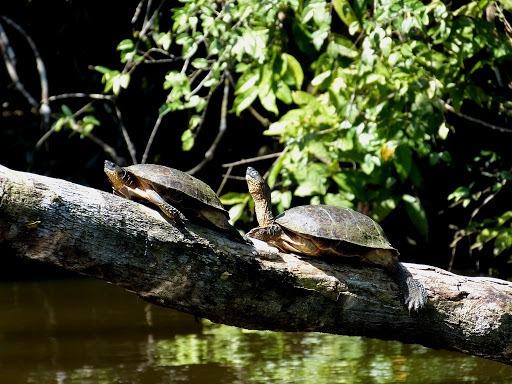 Parque Nacional Tortuguero - Adobe Rent a Car